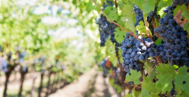 Nacionalni program pomoći sektoru vina