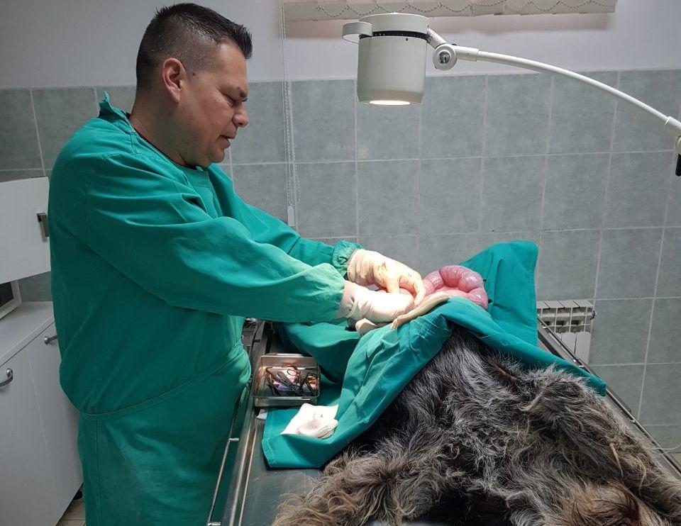 Intervju s veterinarom Krešimirom Kašubom
