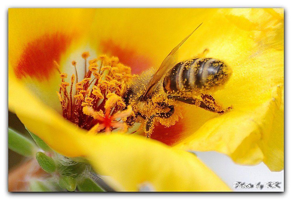 Nova mjera za pčelare upisane u Upisnik poljoprivrednika