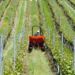 Ministarstvo poljoprivrede raspisalo tri natječaja