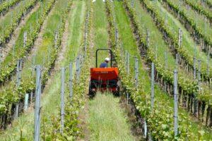 Uskoro novi Javni natječaj za mjeru Restrukturiranje i konverzija vinograda