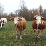 121 milijun kuna za iznimno osjetljive sektore u poljoprivredi